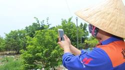 Hà Tĩnh: Nông nghiệp công nghệ cao- nông dân đi du lịch vẫn tưới vườn cây qua điện thoại