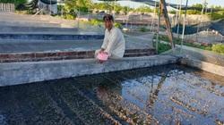 Bỏ phố về quê nuôi toàn con đặc sản, một ông nông dân tỉnh Nam Định bỏ túi hàng trăm triệu/năm.