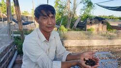 Nam Định: Mát tay nuôi ếch đẻ sòn sòn, một nông dân thu hàng trăm triệu/năm