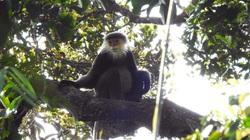"""Phát hiện """"kho báu"""" động vật hoang dã quý hiếm, có loài suýt tuyệt chủng tại rừng Kon Plông"""