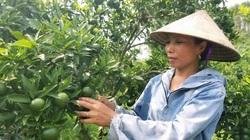 Lạng Sơn xuất hiện nhiều mô hình thu nhập trăm triệu/năm nhờ vốn nông thôn mới trợ lực