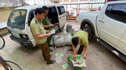 Thu giữ 6.500 túi hạt giống rau nghi nhập lậu