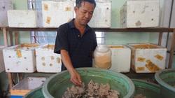 """Quảng Nam: Sang Thái học nuôi con """"gáy cả ngày cả đêm"""", 7X thu lãi hàng trăm triệu/năm"""