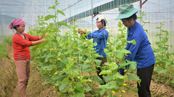 Lào Cai: Nhiều nông dân yên tâm làm giàu nhờ có điều này