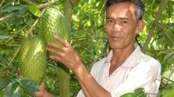 Hậu Giang: Nông dân ở đây trồng thứ mãng cầu gì mà bán được cả trái lẫn lá?
