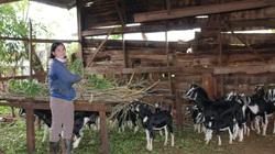 Đắk Lắk: Nuôi dê, trồng bơ, hộ nghèo ở đây có tiền bỏ túi, trở thành hộ khá