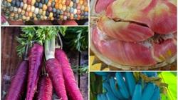 Những trái cây có màu sắc cực dị ẩn chứa bí mật gây sốc