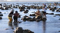 Ninh Thuận: Bất ngờ trước tuyệt tác rạn san hô hiện ra ngoài biển đẹp hơn cả trên phim