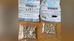6 bang Mỹ cảnh báo hạt giống lạ gửi từ Trung Quốc