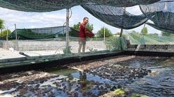 Quảng Bình: Làm chuồng nuôi ếch trên cạn, toàn con to, thò tay xuống là bắt được cả đống