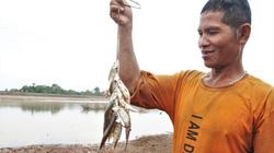"""Quảng Trị: Cách bắt cá sông kỳ lạ, dùng 1 cái """"vỏ sò"""" mà kéo lên bao nhiêu cá"""