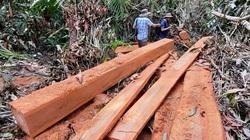 Quảng Nam: Điều tra vụ hạt trưởng kiểm lâm bị dọa giết