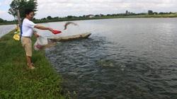 Biết nghề, nông dân Hải Dương nuôi cá lãi cao