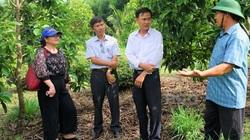 """Bình Định: """"Liều"""" đưa giống bơ ngon từ Đắk Lắk về trồng ở huyện nghèo, cái kết không thể bất ngờ hơn"""