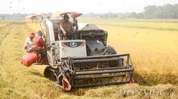 Xuất khẩu gạo trong EVFTA, đừng để tự làm khó nhau