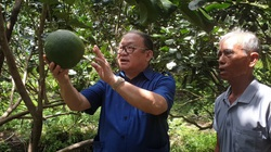 Trà Vinh: Nông nghiệp công nghệ cao-trồng dưa lưới trong nhà kính vụ nào cũng trúng