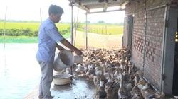 Cán bộ Hội lên Facebook rao bán 10.000 con vịt biển cho nông dân