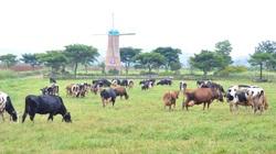 Đánh thức tiềm năng chăn nuôi của Tây Nguyên (bài cuối): Muốn thắng phải đáp ứng tốt 3 điều kiện
