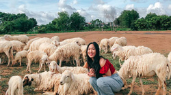 Lạc vào miền quê châu Âu tại 4 đồng cừu Việt Nam