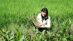 Rau dại một thời mọc vạ vật bờ sông, nay đem trồng thành đặc sản, nông dân Tây Ninh hốt bạc