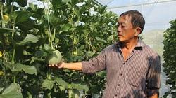 Hà Tĩnh: Nông nghiệp công nghệ cao-trồng dưa lưới vụ nào ăn chắc vụ đó