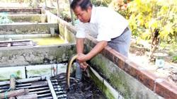 Bến Tre: Tranh thủ nuôi lươn không bùn, bắt bán cả tấn, toàn con to, một thầy giáo phát tài