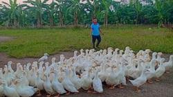 Giá gia cầm hôm nay 6/7: Giá gà thịt công nghiệp miền Nam giảm sâu, vịt thịt tăng giá nhẹ
