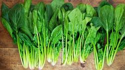 Đọc những lý do này, bạn sẽ mua và ăn rau cải bó xôi thường xuyên ngay lập tức