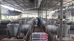 Xã mà kiểu mẫu thế này, tỉnh Đồng Nai sớm về đích nông thôn mới nâng cao