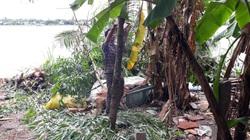 An Giang: Xuất hiện vết nứt bờ tây sông Hậu, di dời khẩn cấp 11 hộ dân