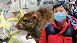 """Bệnh dịch hạch bùng phát ở Trung Quốc thổi bùng sợ hãi đại dịch """"Cái chết đen"""""""