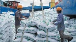 Thị trường xuất khẩu gạo chững lại
