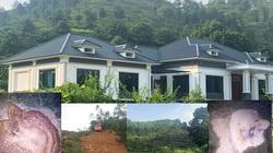 """Vụ rừng phòng hộ bị """"hạ sát"""" ở Vĩnh Phúc: Chủ tịch tỉnh yêu cầu làm rõ hành vi phá rừng"""