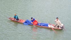Sơn La: Thả hơn 200.000 cá giống vào hồ thuỷ điện Sơn La