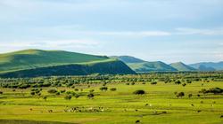 Vùng Nội Mông đóng cửa vì dịch hạch