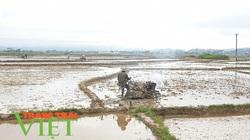 Điện Biên: Tập trung sản xuất vụ hè thu