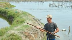 Ở đâu như ở đây, dân tranh thủ nông nhàn đi cào lươn đồng cũng có tiền đút túi
