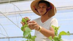 Hà Tĩnh: Làm nông nghiệp công nghệ cao, nắng nóng 40 độ C, vườn dưa lưới vẫn xanh mướt, trĩu quả