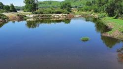 """Nghệ An: Trại lợn xả thải, biến hồ Tràng Đen thành hồ """"chết"""""""