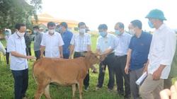 Thanh Hóa: 42 con bò đẹp như tranh được Hội Nông dân tỉnh trao cho hộ nghèo, cận nghèo