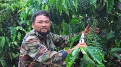 """Lâm Đồng: Lão nông U60 và khu vườn """"6 trong 1"""" cho thu nhập gần 400 triệu đồng"""