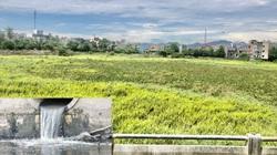 Quảng Ngãi: Muốn vận hành đập dâng 1.500 tỷ, phải làm hệ thống nước thải 300 tỷ