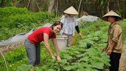 Bộ trưởng Nguyễn Xuân Cường nói về nông nghiệp hữu cơ như thế nào?