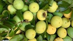 Người Hà thành lùng mua quả thị thơm: Ngày bán 6 tạ, kiếm lãi tiền triệu