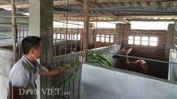 """Điện Biên: Nuôi loài thú chỉ cắt sừng non bán đắt tiền, một nông dân """"hái"""" lộc đều như vắt chanh"""