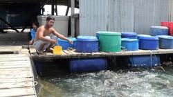 """""""Con trời ơi"""" - sinh vật lạ làm chết cá lồng thế nào mà Kiên Giang phải chi 1,5 tỷ nghiên cứu?"""