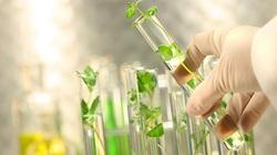 Trung Quốc đẩy mạnh nghiên cứu về thuốc nano trong nông nghiệp