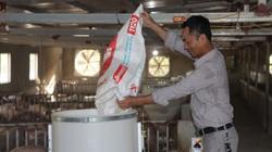 Kiên Giang: Kiểm tra tái đàn lợn, Thứ trưởng Bộ NNPTNT lưu ý 6 vấn đề
