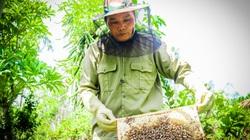 Hà Tĩnh: Nông dân có của ăn của để nhờ nuôi loài côn trùng chăm chỉ làm việc nhất thế giới