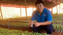 Cây khôi nhung, cây hà thủ ô quý thế nào mà khiến 8X Bắc Kạn bỏ việc nhà nước về trồng la liệt?